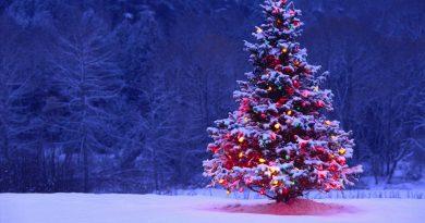 ¿Conocés el origen del arbolito de Navidad?