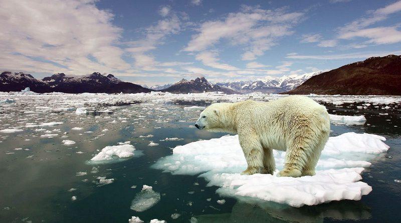 Es ahora o nunca: 5 cosas que podés hacer para evitar el calentamiento global