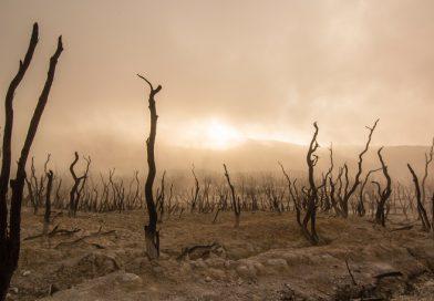 17 de junio: Día de Lucha contra la Desertificación y la Sequía