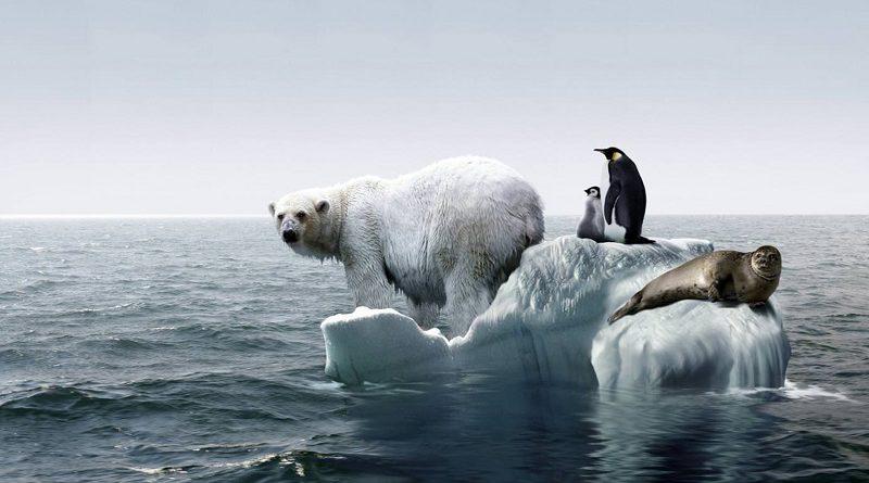 """ONU: """"Gran parte de la naturaleza ya está perdida, y lo que queda continúa en declive"""""""