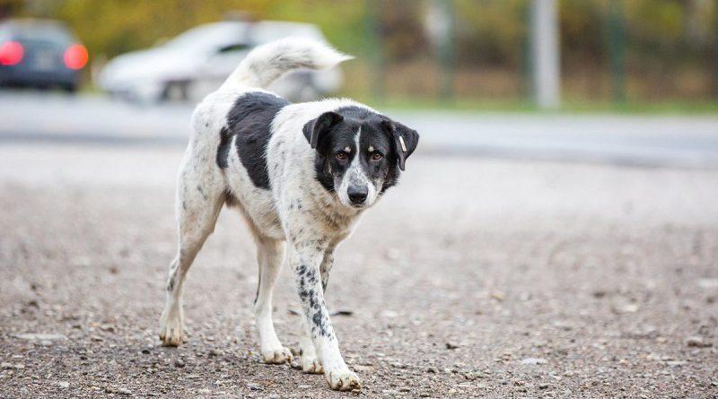 Un tarrito de agua para los perros callejeros: ¿Te sumás?