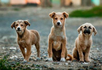 27 de julio: Día internacional del perro callejero