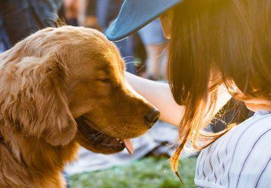 Los perros pueden oler las emociones de sus dueños