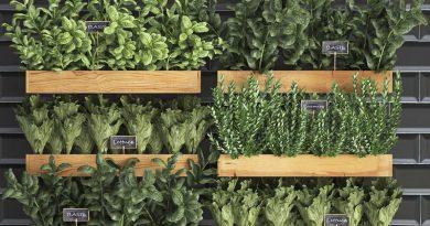 10 frutas y verduras para cultivar verticalmente en espacios reducidos