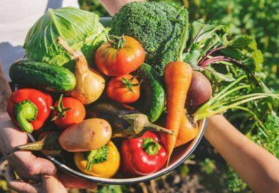 18 de junio: Día de la Gastronomía Sostenible