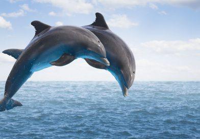 23 de julio: Día Mundial de las Ballenas y los Delfines